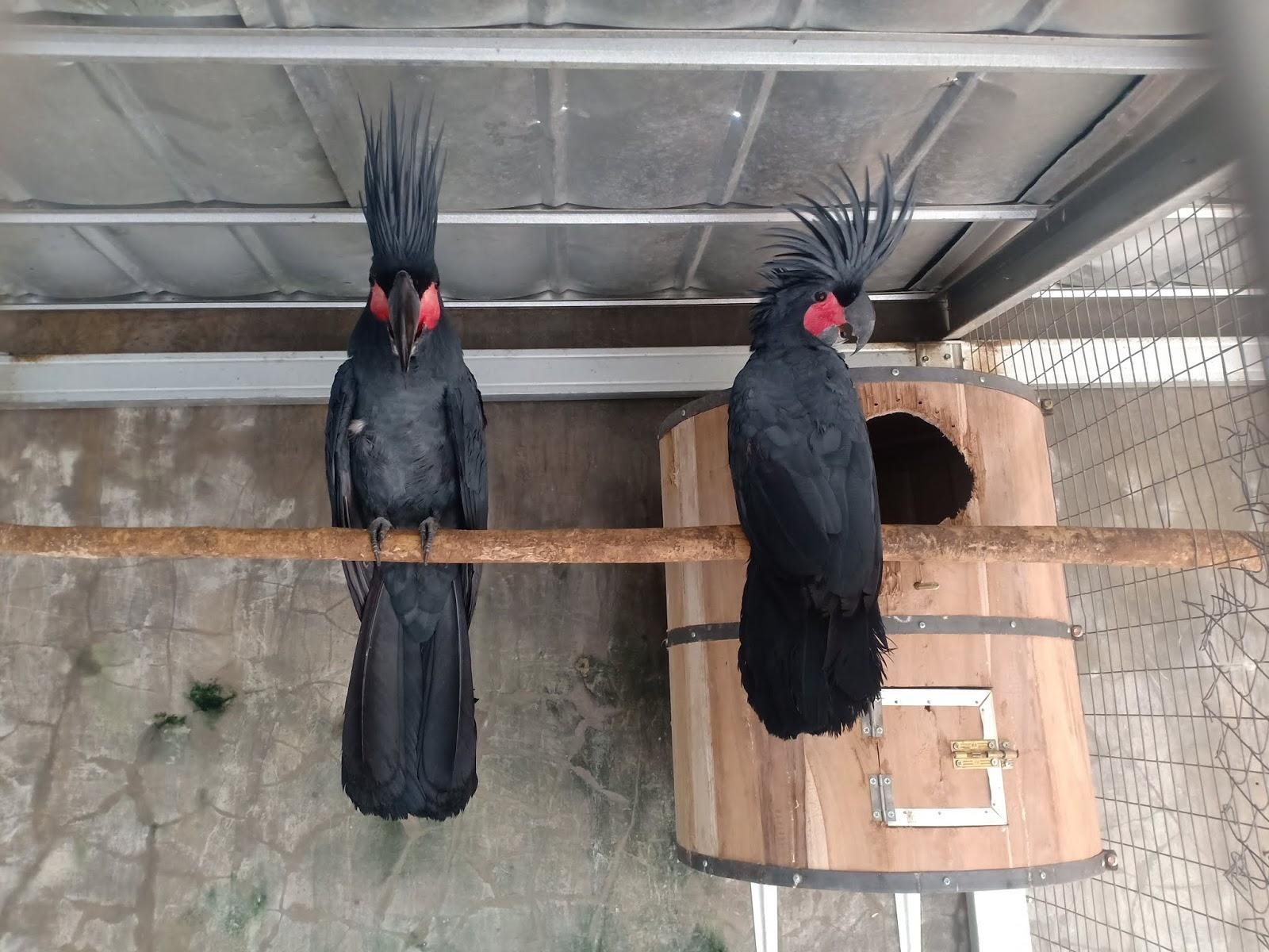 Jual Burung Kakatua Raja Parrot Store